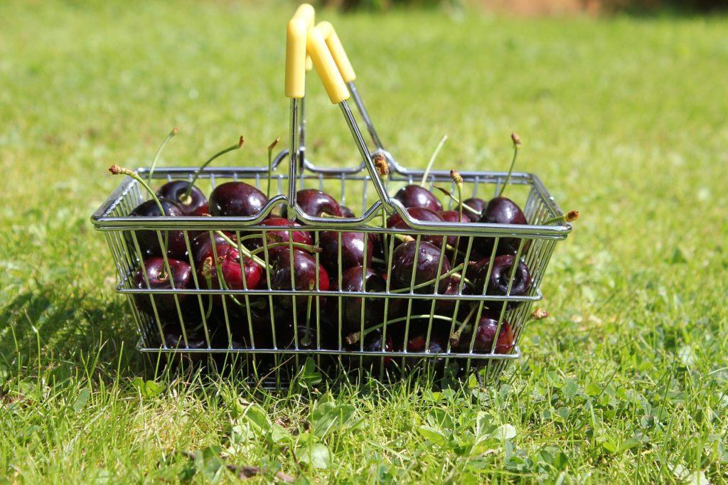 Cherry Picking als ein Bild für die Aktienselektion